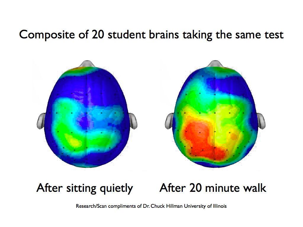 Brain development in aged 2 6 photo 2